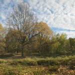"""Paysages : """"Clairière au soleil d'automne"""""""