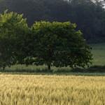 """Paysages : """"Deux arbres"""""""