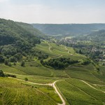 """Paysages : """"Vignoble et coteaux jurassiens"""""""