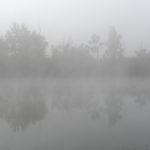 Rives d'un étang un jour de brouillard