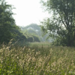 Hautes herbes, un matin de printemps