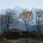 Trois arbres et une montagne