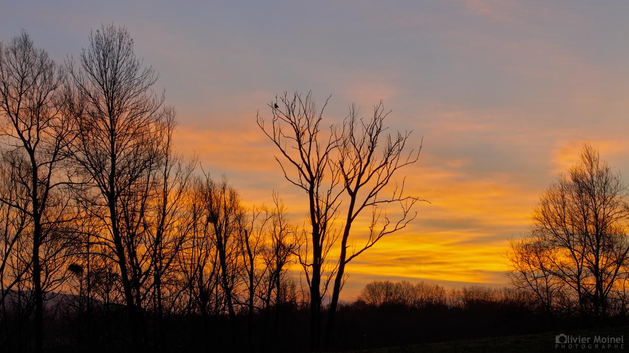 Ciel flamboyant derrière une haie d'arbres