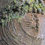 Motif en forme d'œil sur un tronc d'arbre