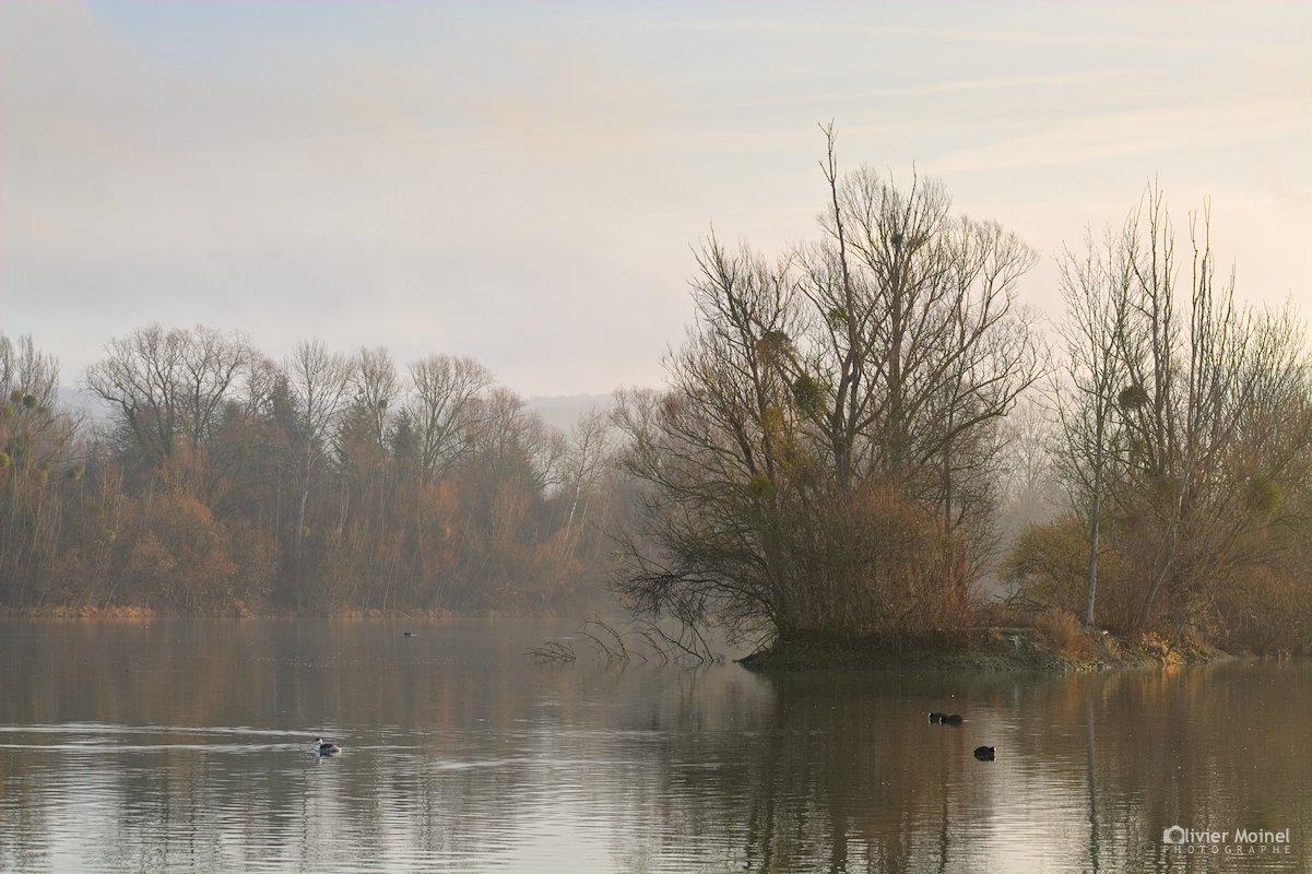 Un étang, un matin d'hiver avec quelques oiseaux d'eau