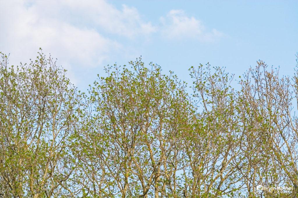 Cimes d'arbres