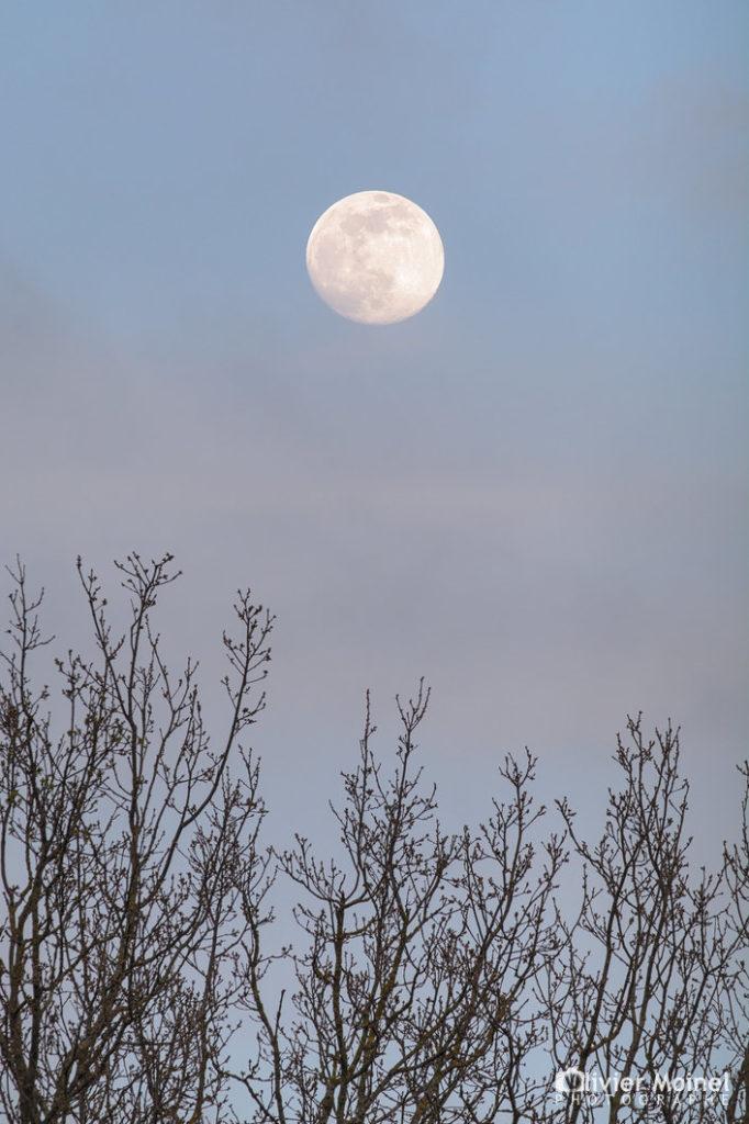 Lune gibbeuse au dessus de la cime des arbres