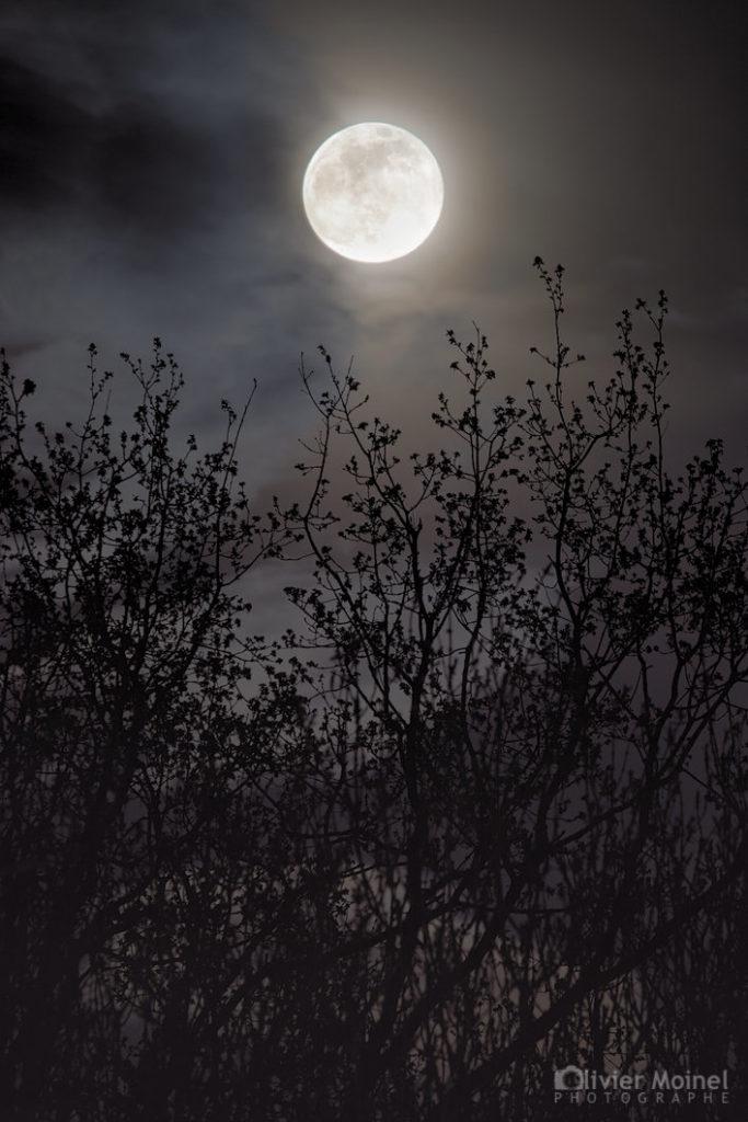 Pleine Lune au dessus de la cime des arbres